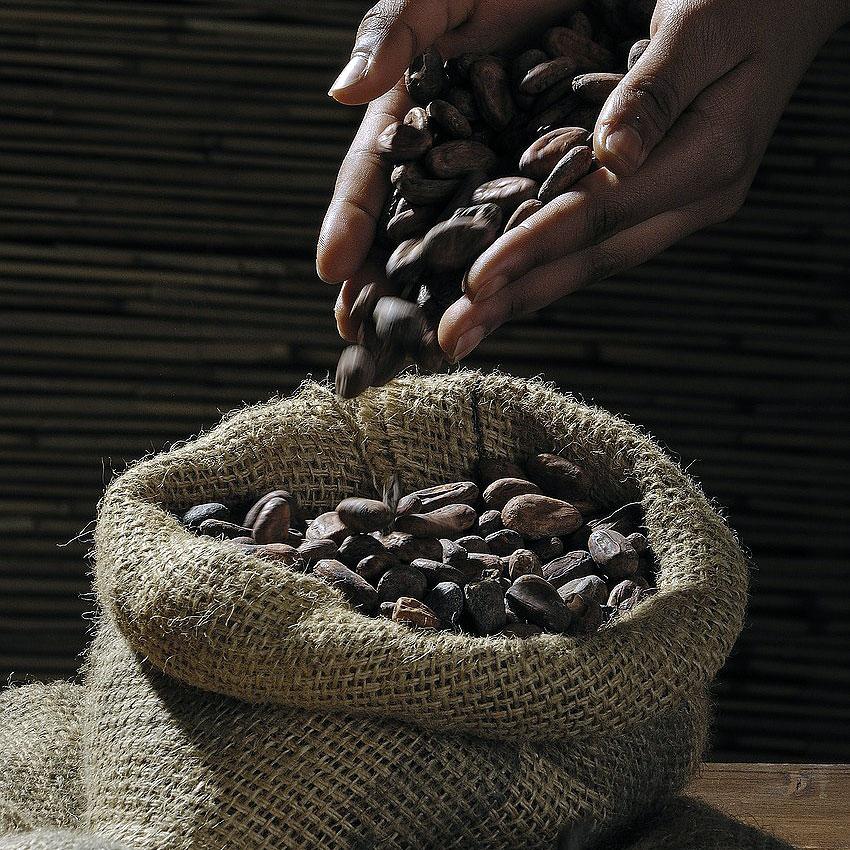 История на какаото