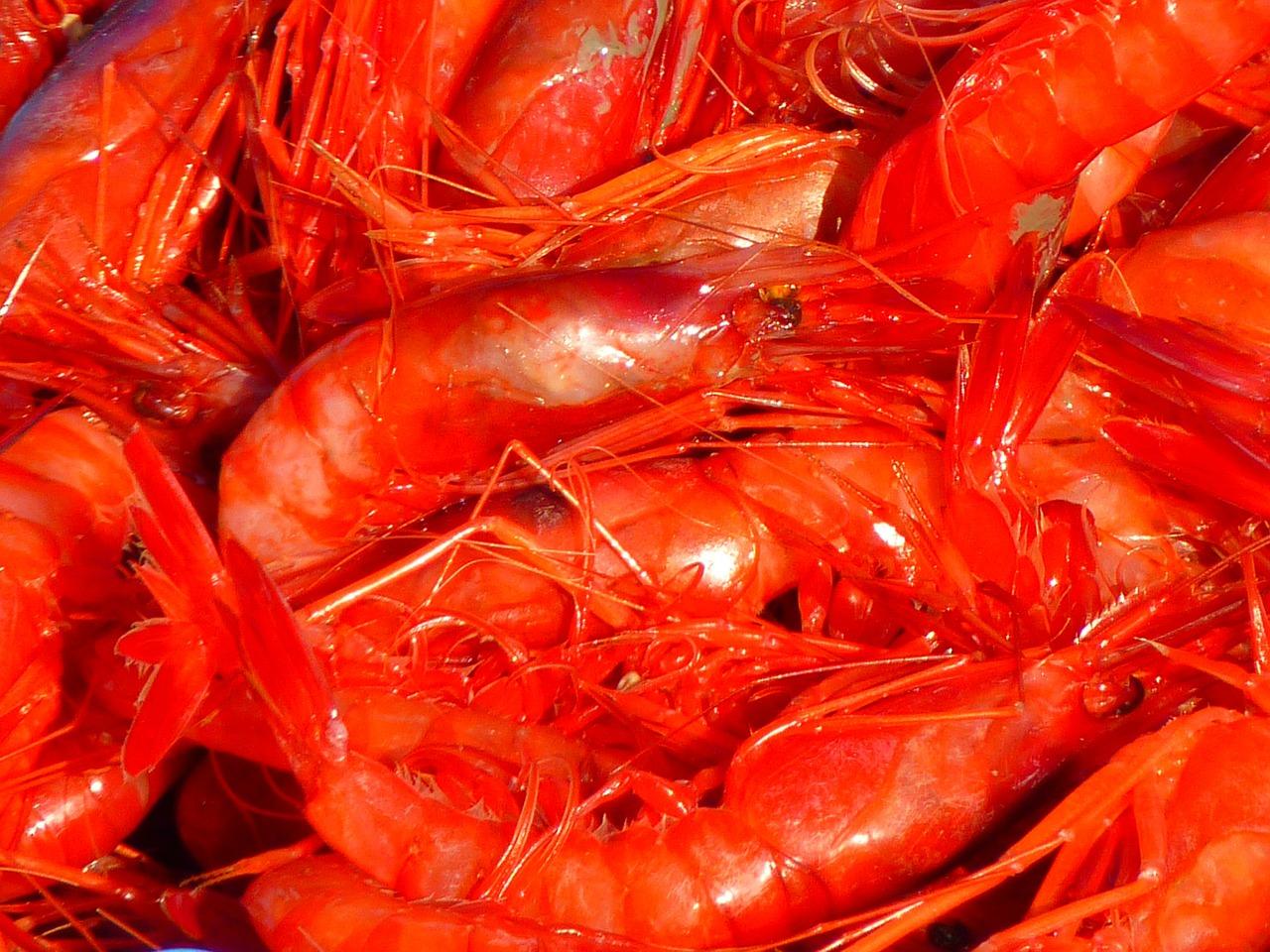 Морските деликатеси – полезни съвети